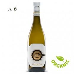 Pecorino Offida DOC - Centanni (6 bottles box)